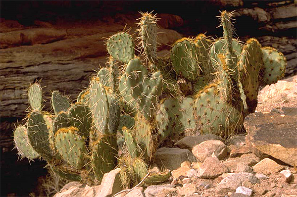 deserts animals and plants - photo #1