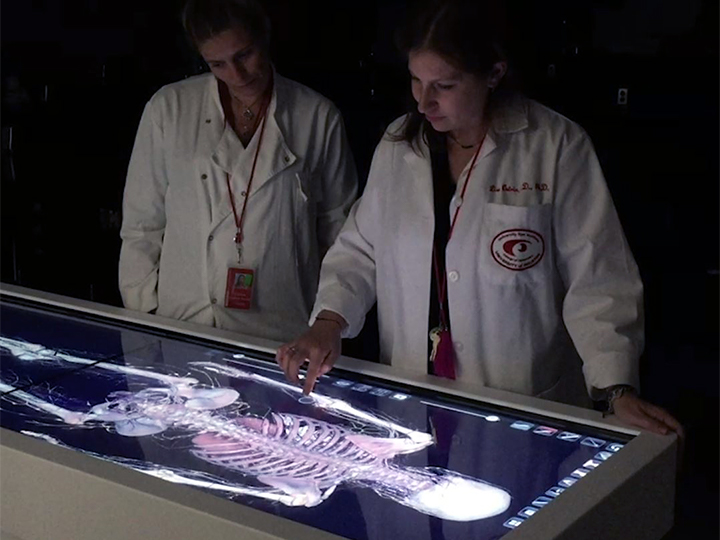 Dissecting Digital Cadavers